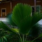 Hacienda Itzincab-Cámara, Itzincab, Mérida, Yucatán, México