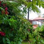 Grounds of El Remanso Eco Lodge, Osa Peninsula, Costa Rica. © Justin Black