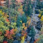 Full spectrum autumn color along Clear Creek, Zion National Park, Utah