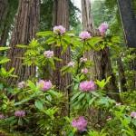 Del Norte Redwoods State Park