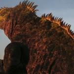 Marine iguana basks in the sun, Galapagos Islands, Ecuador