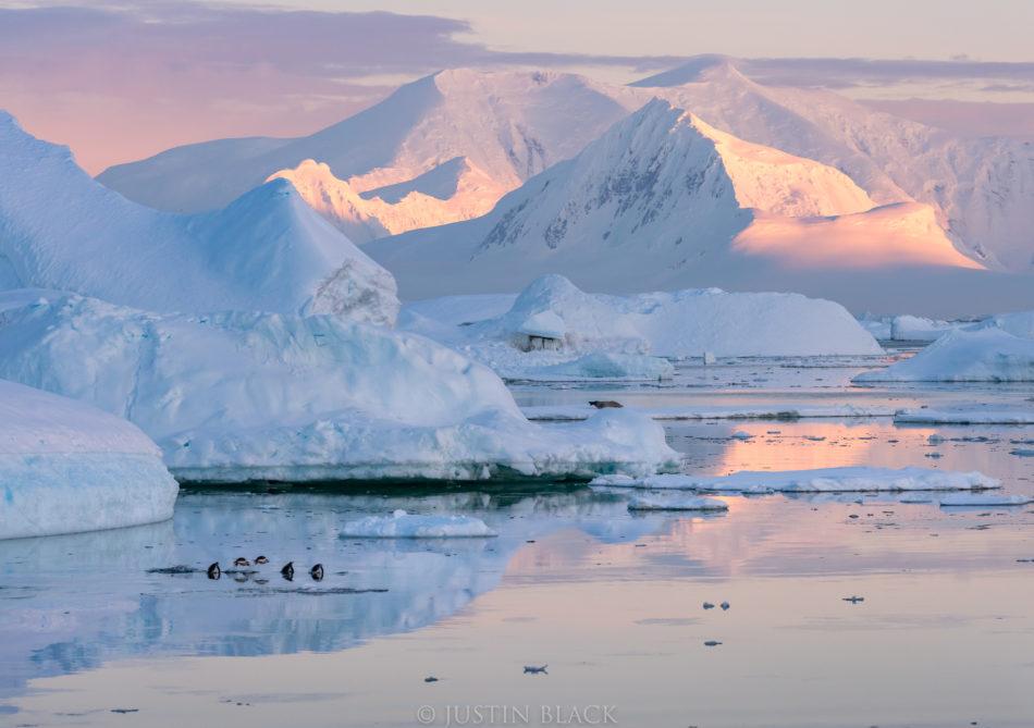 Visionary Wild Antarctica